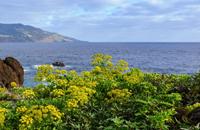Canarian Island Explorer